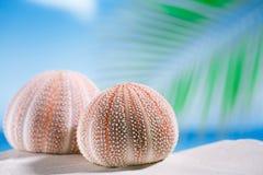 Sea urchins  on white sand beach Stock Photo