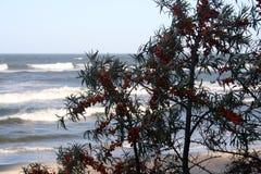 Sea vegetation Stock Photos