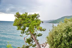 Sea view. A beautiful sea view with trees Stock Images