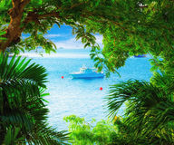 Sea view through the branches Royalty Free Stock Photo