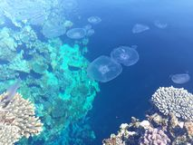 Coral reef and jellyfishes stock photography