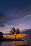 Sea view at Krabi. With a tree on background Royalty Free Stock Photography