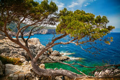 Sea view with pine and rocky coastline. Beautiful sea view with pine and rocky coastline, Mallorca, Spain Royalty Free Stock Photography