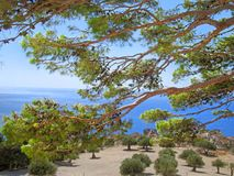 Sea view through the pines. Beautiful sea view through the pines royalty free stock images