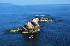 Sea view with rock and seagull Royalty Free Stock Photography