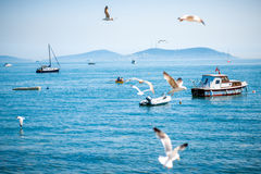 Sea view with seagulls and boats in Istanbul Royalty Free Stock Photos
