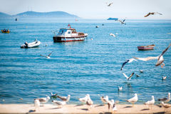 Sea view with seagulls and boats in Istanbul Stock Photos