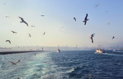 Sea view with seagulls and ships in Istanbul Stock Photos
