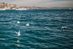 Sea view with seagulls and ships in Istanbul Stock Images
