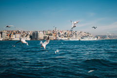 Sea view with seagulls and ships in Istanbul Royalty Free Stock Photos