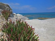 Sea view from the shore with a grass close up in front Royalty Free Stock Photo