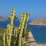 Sea view and terrace with cactus and flowers, Greece Stock Image