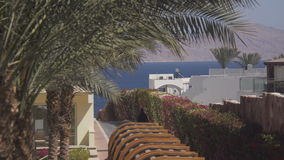 Sea view Terrace and palms. Pool Terrace outside the room stock footage
