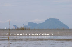 Sea view with the white bird. At krabi Thailand Royalty Free Stock Photos