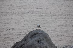Sea, Water, Bird, Seabird royalty free stock photography