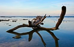 Sea, Water, Sky, Driftwood Royalty Free Stock Photography