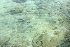 Sea Water with white coral or reefs