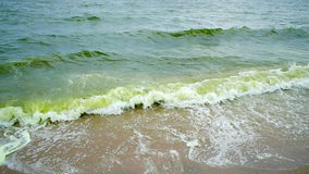 Sea wave and Algal bloom in sea stock video footage