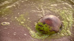 Sea wave with coconut on beach and Algal bloom in. Sea stock video footage