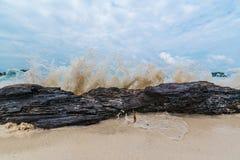 Sea wave crashing on the tree branch. Stock Photos