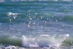 Sea, wave, gulls Royalty Free Stock Photos