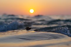 Sea wave and rock close up at sunset time with red orange sun reflection on the water. nature abstract blurred background. Phuket. Sea wave closeup at sunset royalty free stock photos
