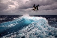 Sea wave and seagull Royalty Free Stock Photography