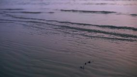 Sea wave during the sunset. The sea wave at the beach with sunset light reflection on the water during the golden hour in the evening stock video