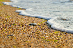 Sea wave washes over stones on the beach Stock Photography