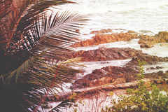 Sea waves breaking on a rocks. Palm tree leafs. Tropical ocean l. Andscape. Vintage effect Royalty Free Stock Photography