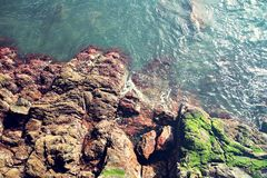Sea Waves hitting rocky beach with green moos. Top view on madeira island Stock Photography