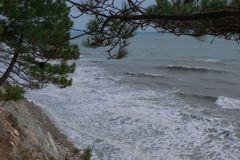Sea waves and pines stock image
