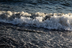 Sea waves. The waves of the sea, relax on the beach, the sound of the surf Stock Photo