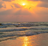Sea waves and seagull flies against the background of setting sun Royalty Free Stock Images