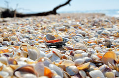 Sea waves washed clean beach made of shells. Stock Photo