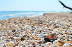 Sea waves washed clean beach made of shells. Stock Photos