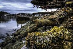 Sea Weed Stock Image