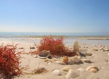 Sea Weed and shells on the sand Stock Photos