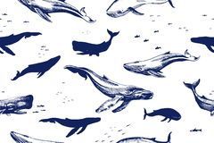 Sea whales seamless pattern stock images