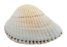 Sea white-pearl shell, close up isolated, white background Royalty Free Stock Photos