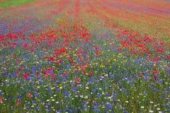 Sea of wild flowers in Castelluccio di Norcia Stock Photos