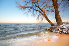 Sea and winter Stock Photography