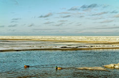 Sea in winter. Stock Images