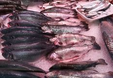 Sea wolf, sea bass and sardines. On the ice bed in the refrigerated display case Royalty Free Stock Photos
