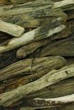 Sea wood Stock Image