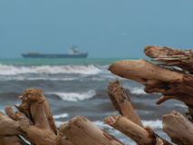 Sea and wood trunks. Beach view whit trunks and sea Royalty Free Stock Photography