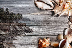 Sea Wooden texture with shells Royalty Free Stock Image