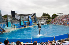 Sea World Orca Stock Image