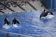 Sea World Orlando Florida Stock Images