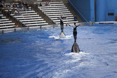Sea World Orlando Florida Royalty Free Stock Images